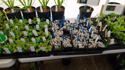past plant sale selection