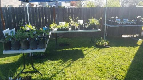 past plant sale in Sensory Garden