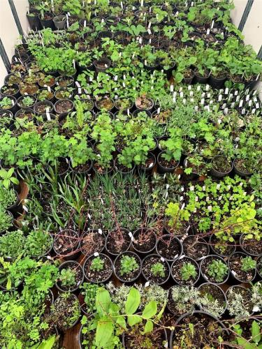 native plant selection 2019