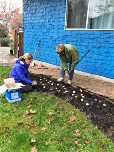 Planting Bulbs Peace 1 (2)