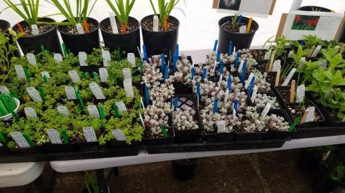 past plant sale selection