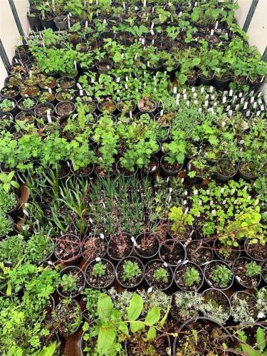 native plant selection 2019