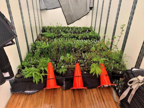 native plant selection 2019 heading to plant sale